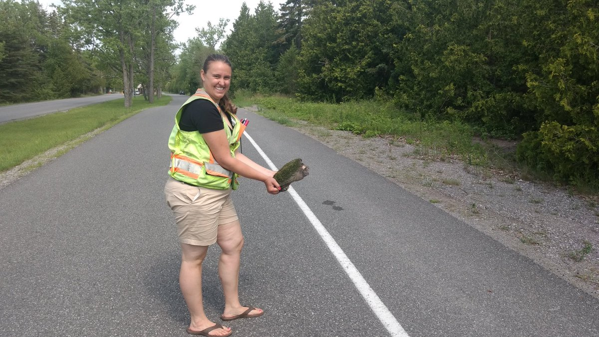Now that @PresquilePP is open again, please make sure to watch for #turtles , #frogs and #snakes ! I know they all will appreciate it! <br>http://pic.twitter.com/yj7VtDjCwk