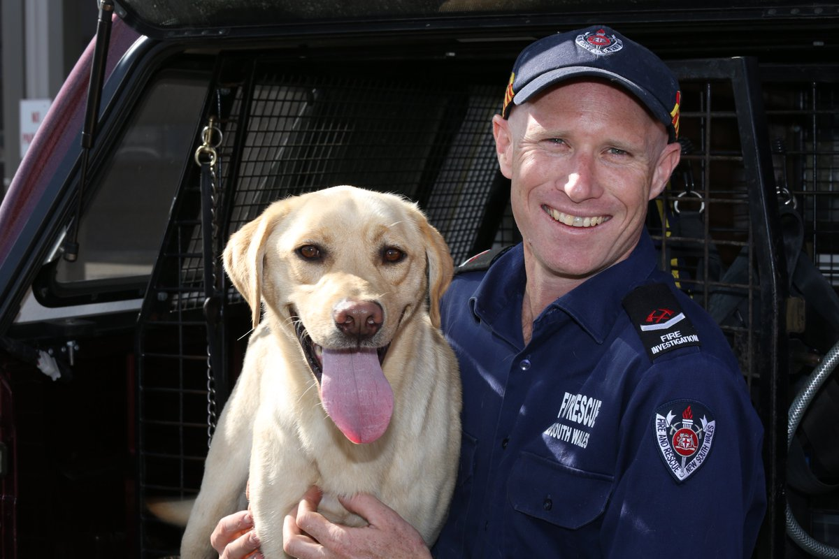 Every day is #TakeYourDogToWorkDay for #FRNSW officers in our accelera...