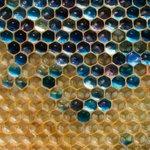 フランス北東部で見つかった青や緑の蜂蜜news.nationalgeographic.com/new…