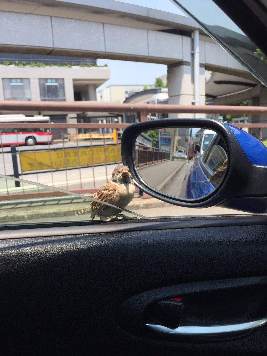窓開けてたら野生のポッポが車内入って来たwwwwwwww