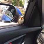 窓開けてたら野生のポッポが車内入って来たwwwwwwww pic.twitter.com/pul70…