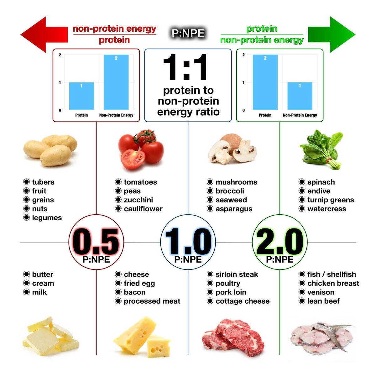 paleo diet fat protein carb ratio
