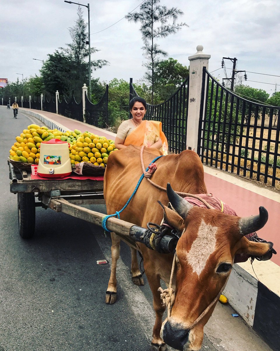 A cart full of summer goodness- Malihabadi Dussehri Mangoes coming my way! #mango #dussehri #dussehrimangoes #mangoes  #lucknow #malihabad<br>http://pic.twitter.com/c8B06xMwO1