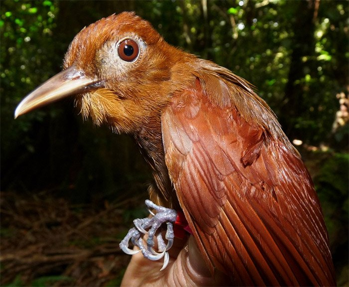 Birds of all feathers work together to hunt when army ants march #ornithology  http:// bit.ly/2sSWRbK  &nbsp;  <br>http://pic.twitter.com/evH6Nx9IZc