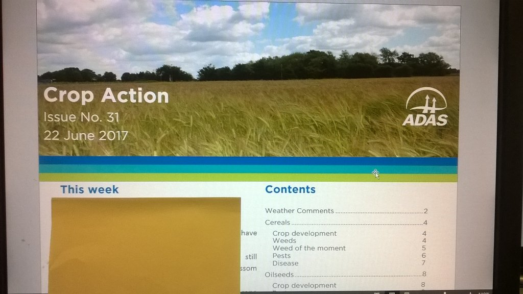 This week&#39;s Crop Action underway. Crack team of 11 #crop experts contributes. DM for more info. #farming #agronomy <br>http://pic.twitter.com/YGtVDVl5x1