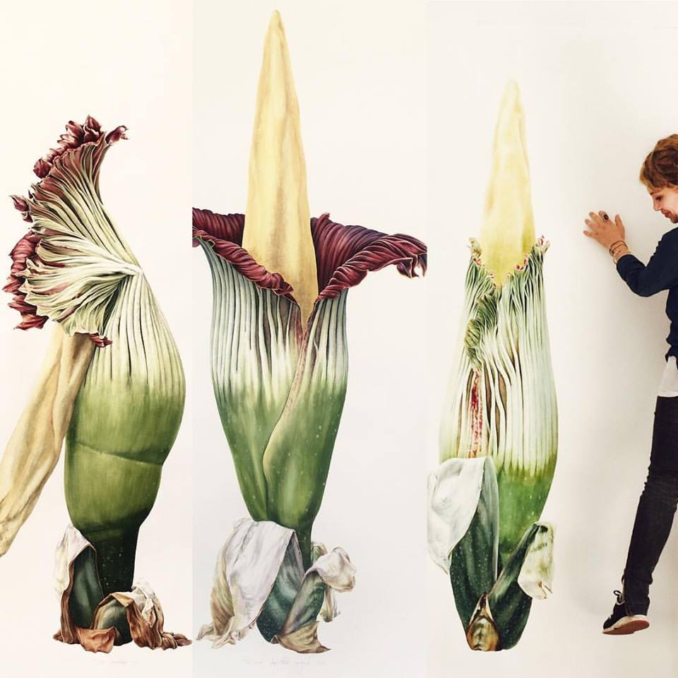 Artist Işık Güner, shows the scale of the @TitanArumRBGE triptych, despite them being 3/4 of the real plant size. https://t.co/R3w2WNJSYm