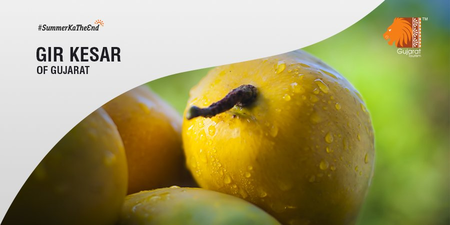 Relish this summer with the popular 'Kesar' variety of #mango, largely grown around the foothills of Girnar Mountains. #SummerKaTheEnd<br>http://pic.twitter.com/PAnxXTteaY