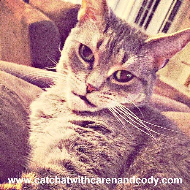 CatChatCaren