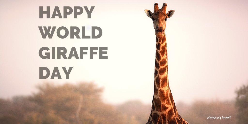 Happy #WorldGiraffeDay! https://t.co/SoOYAhlg3j