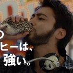 山田孝之のコーヒーをハリネズミに差し替えてやったぜ pic.twitter.com/6i8OY67B…
