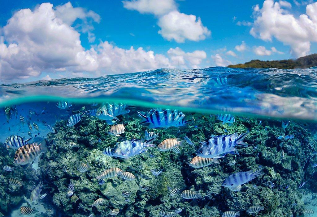 タヒチより帰国しました。 空も海の中も夢のように鮮やかな世界でした。(ボラボラ島にて撮影) 今日もお疲れさまでした。明日も穏やかな一日になりますように。
