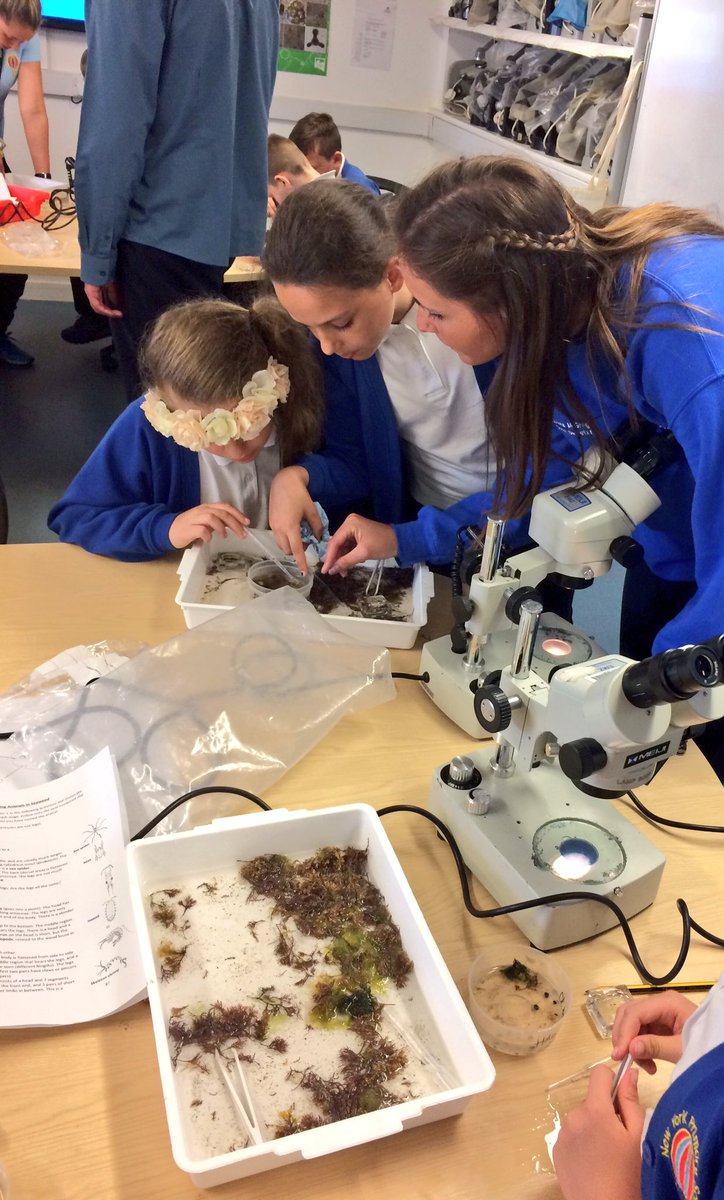 Using microscopes to explore rocky shore habitat for #STEM week at New York primary school #MarineBiology @Annie__Russell @NCLDoveMarine<br>http://pic.twitter.com/o4zrlBD4LN