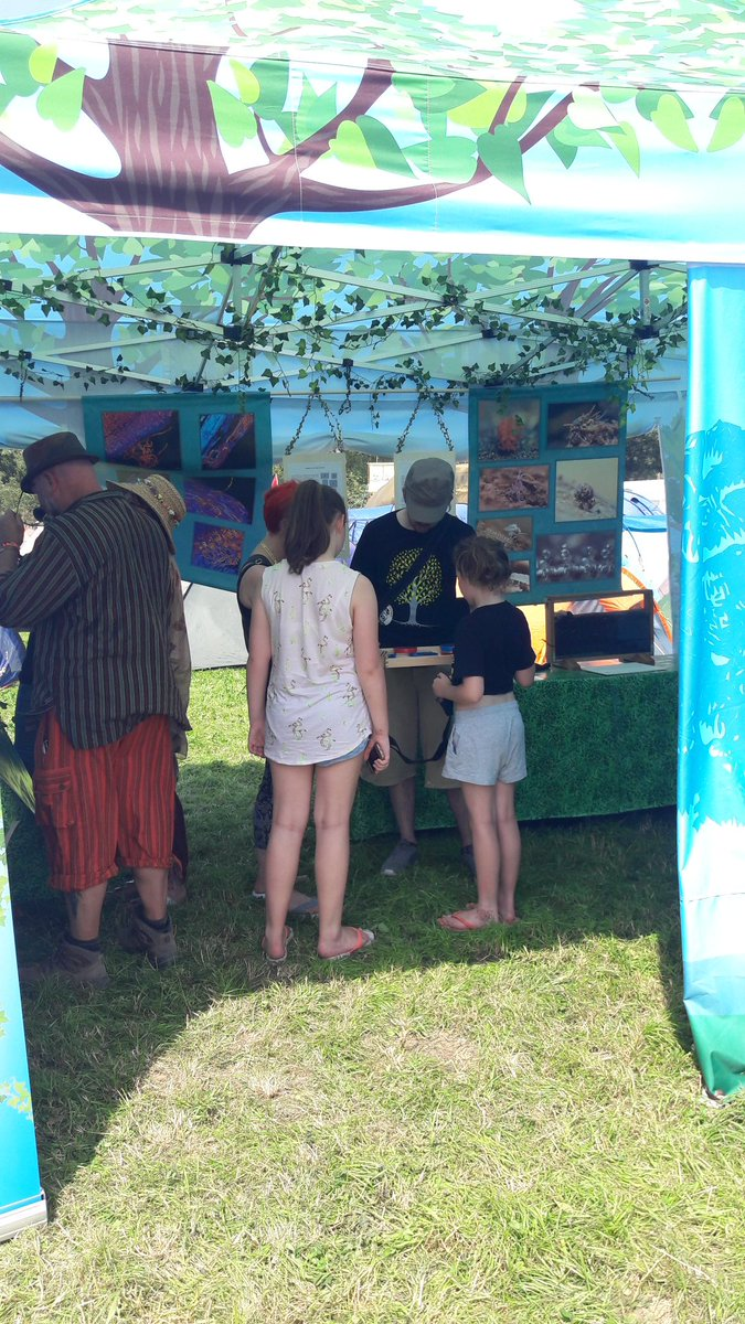 We&#39;re open &amp; busy! Come &amp; shelter in the shade of our #woodland &amp; discover our #festivalbugs if you&#39;re at #Glastonbury this #heatwave2017!<br>http://pic.twitter.com/rwOafRTEuk