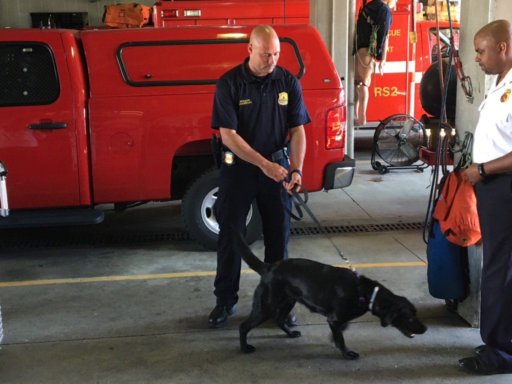 DC arson specialist Scott Wilson at Eng24 w/new canine partner Bandel who sniffs out arson clues. #NBC4DC <br>http://pic.twitter.com/HHdeUX6KXy