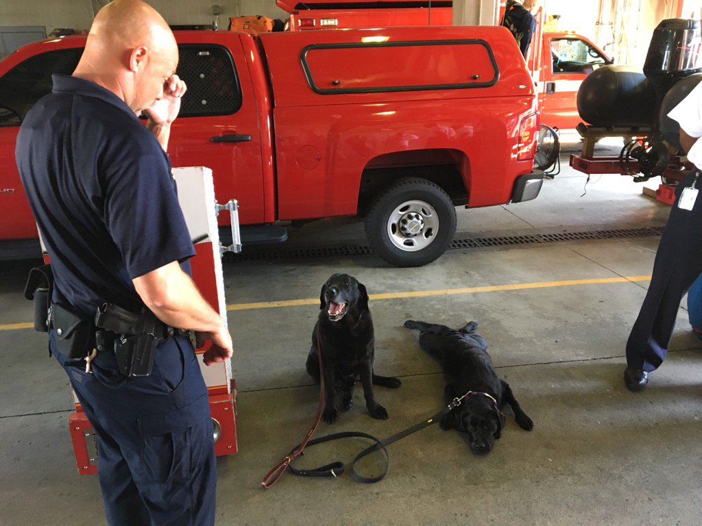 New D.C. arson dog Bandel (r) taking over from 11-yr-old Roo, retiring to live w/arson expert Scott Wilson. #NBC4DC <br>http://pic.twitter.com/1nPHK43pMK