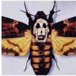 羊たちの沈黙で強烈なインパクトを放つドクロ模様の蛾ですが、実はサルバドール・ダリの人体トリックアート…
