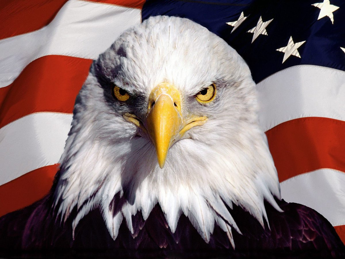 On This Day In 1782 Congress Officially Adopted The Bald Eagle As A