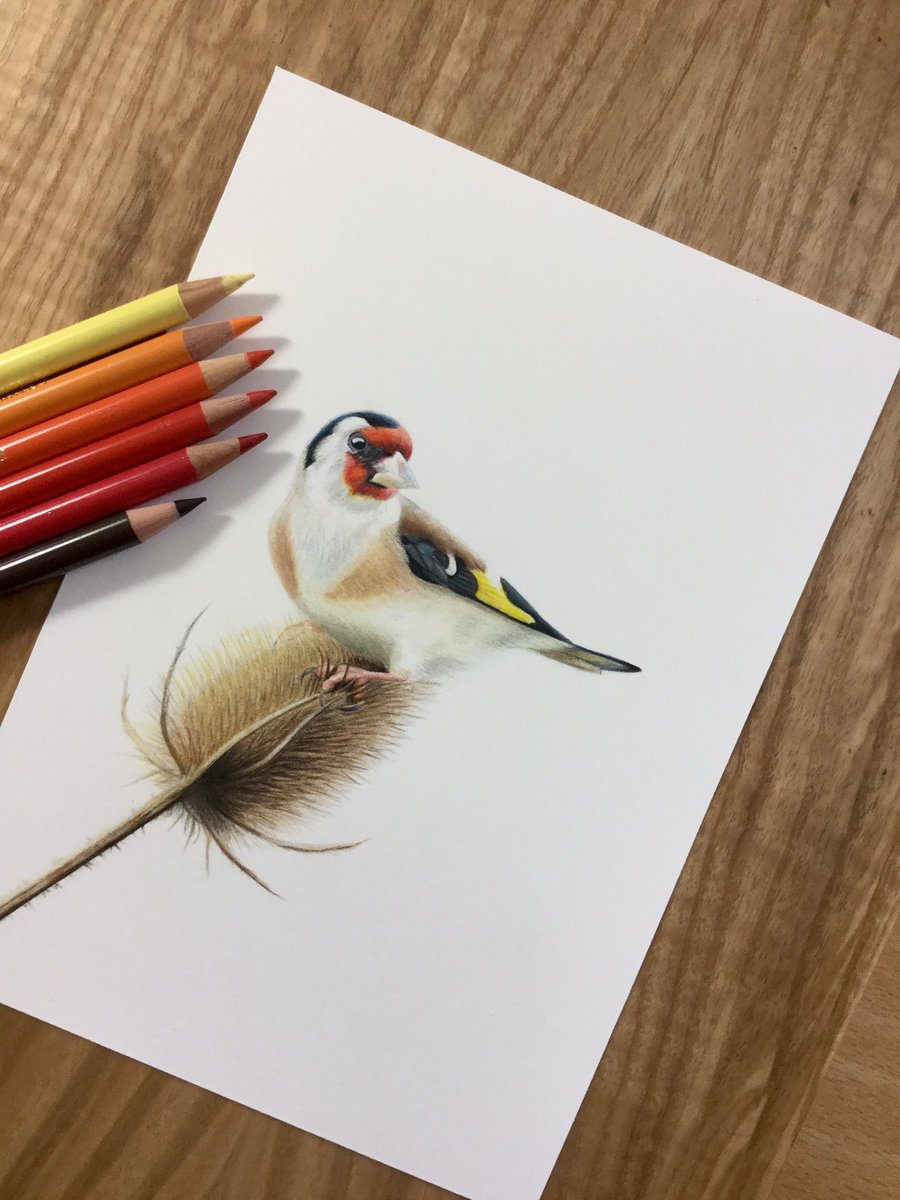 commissioned Goldfinch on Teasel . Cp&#39;s  on hpwc paper #Art #colourpencil #ornithology @FaberCastell #polychromos #colourpencil #wildlife<br>http://pic.twitter.com/5feQX0pW2e