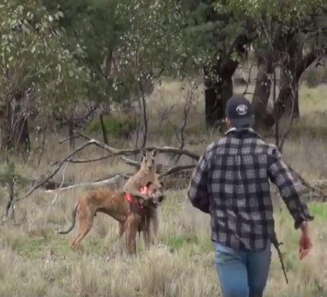 - Oh tu fait quoi a mon chien !! - Op op reste la bas ou j'lui tord le cou - Mais t'es un kangourou wesh tu va rien faire !! 1/4