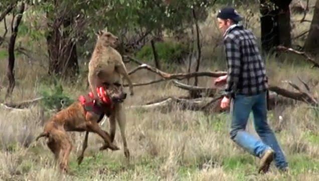 - Mais t'es sérieux t raciste des kangourou ? - Lâche mon chien jte dit !! - Jvai t'allonger parle bien gros 2/4