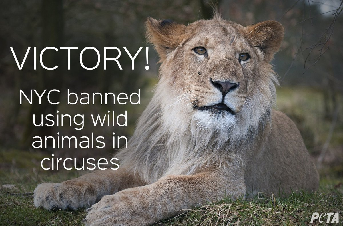 BREAKING: #NewYorkCity council just voted to ban using wild animals in circuses! Thanks to everyone who spoke out!  http:// peta.vg/1zab  &nbsp;  <br>http://pic.twitter.com/qIo1M4REmu