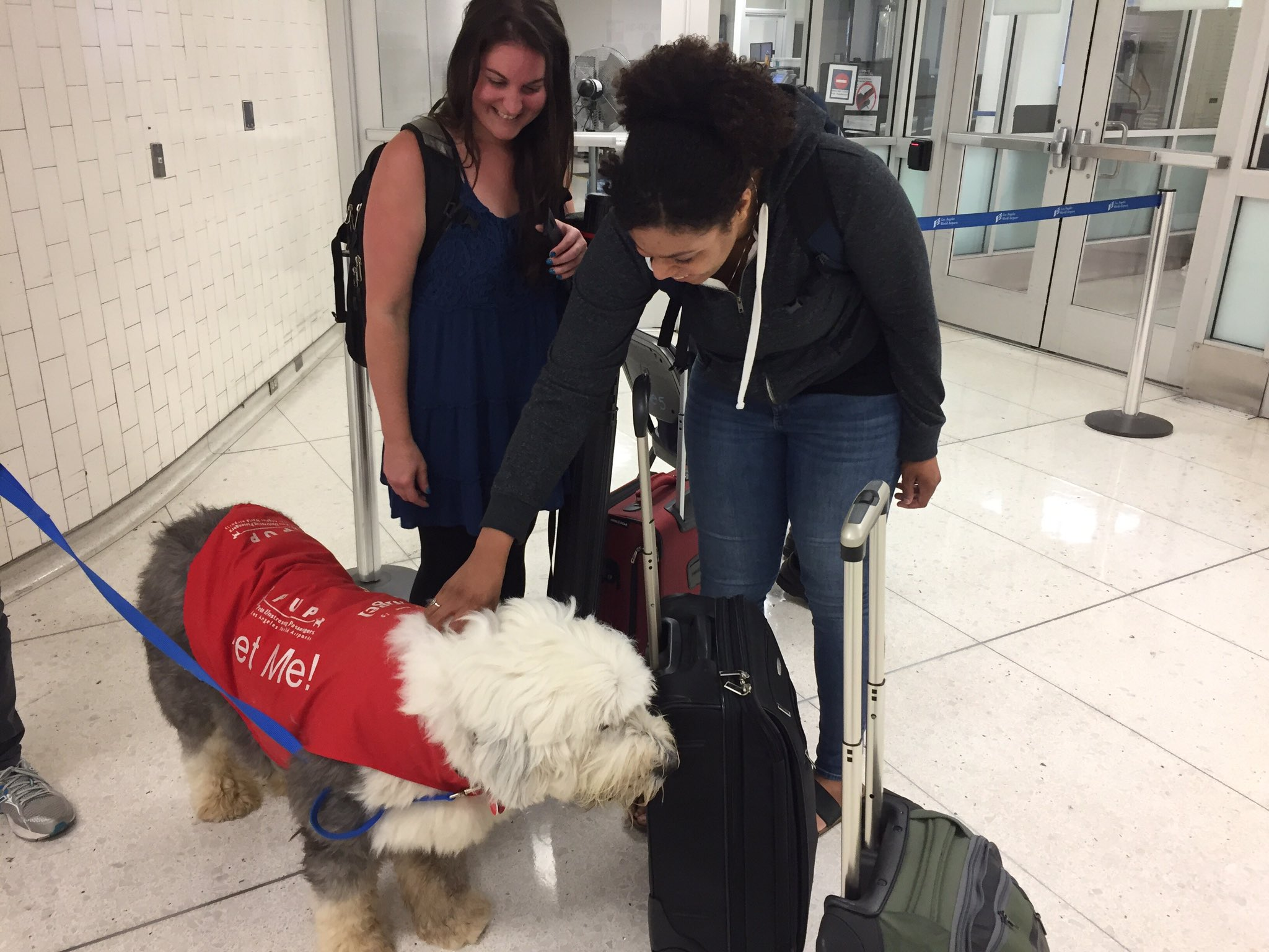 .@ward_lab getting de-stressed 2ith Nigel the therapy dog ahead of #worm17 @GuinevereAshley @Iam_Londen @GeneticsGSA https://t.co/oy38XXyOMX