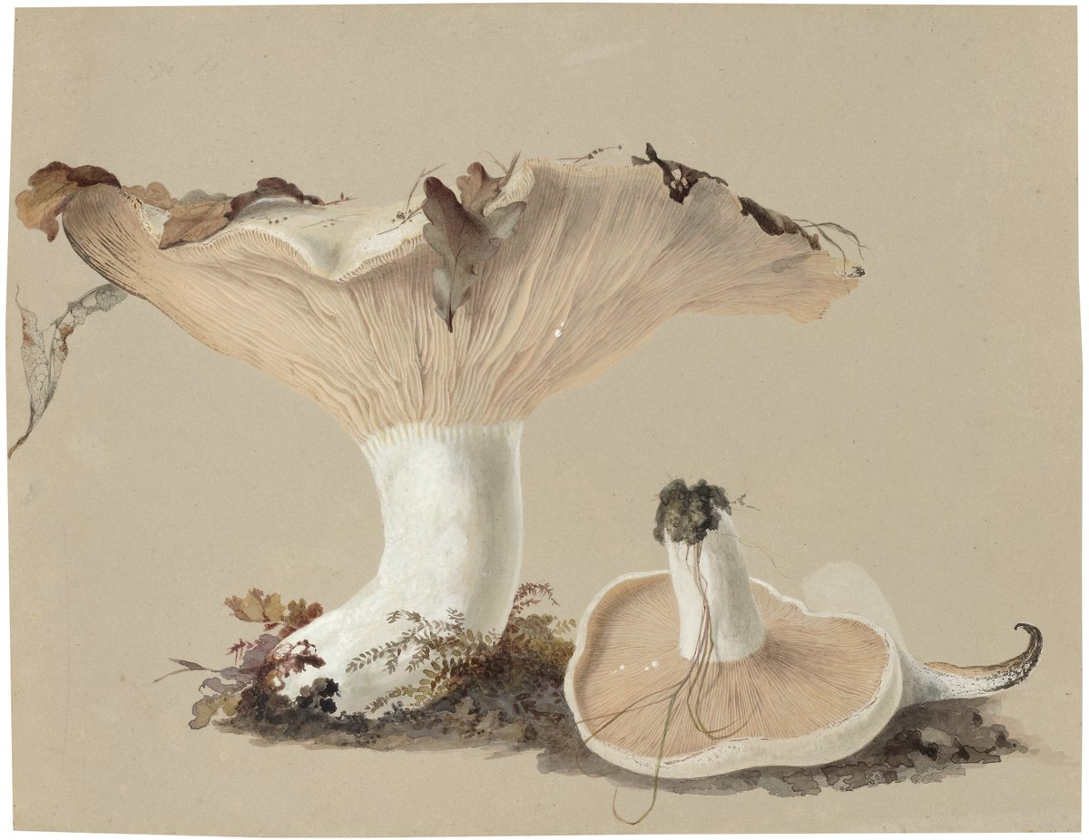 Anna Maria Hussey (1805-1853) defied the conventions of Victorian women with her work depicting fungi &gt; flora #MuseumWeek #WomenMW #SciArt <br>http://pic.twitter.com/ST8tEmmqGm