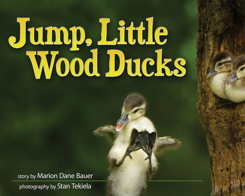 Jump, Little Wood Ducks is the title of our latest children&#39;s book. Order your copy now.  http:// amzn.to/2rhK6US  &nbsp;   #birding #WoodDucks <br>http://pic.twitter.com/ndUj8lEN6o