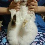 抱っこして貰ってくつろいでいた所、爪切りを持った母が登場し驚愕するおキャット様が撮れたのでご覧下さい…