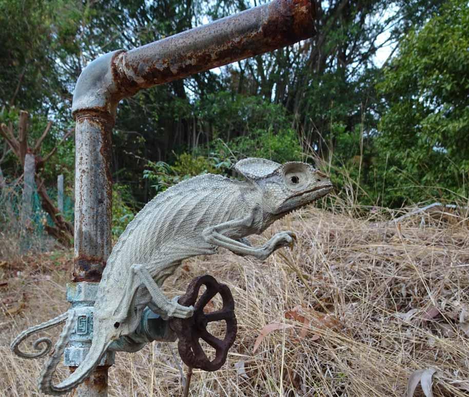 【インド】水を飲む姿勢でミイラ化したカメレオンが発見される   撮影者「カメレオンはこのパイプから水が出ることを知っていて、ここまで来たのでしょう・・・栓が閉められているとも知らずに。。 」