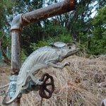 【インド】水を飲む姿勢でミイラ化したカメレオンが発見されるnews.nationalgeograph…