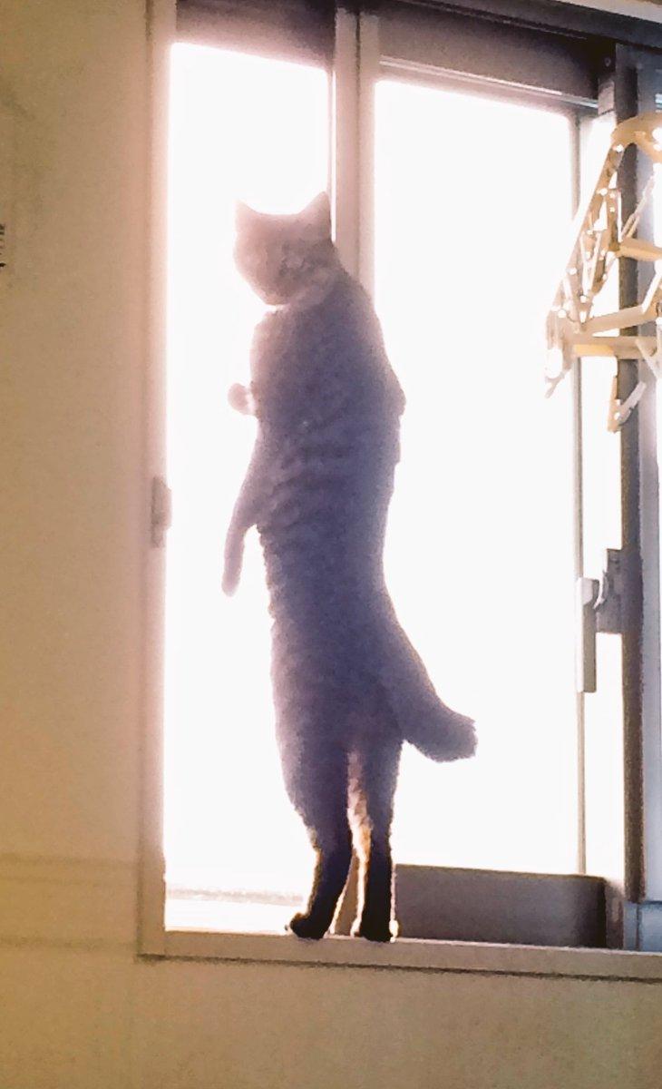 うちのネコと和解しようとしたらこんな感じで 「話は外で聞こう」 と言われました  和解は諦めます  #ネコと和解