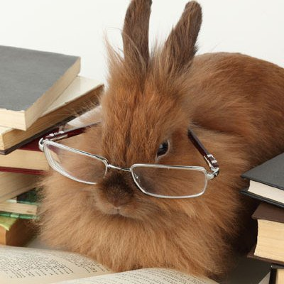 Do #glasses make our pets more #intelligent? Would you put a pair on your #pet? #reading #readingglasses #Gloucester  http:// bit.ly/2sTBc2S  &nbsp;  <br>http://pic.twitter.com/kouW67eTmH
