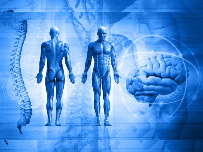Los huesos también se comunican con el cerebro. Ajá, los huesos hablan. ¿Cómo lo hacen? Mira: https://t.co/6wz1EbaLFG #ciencia