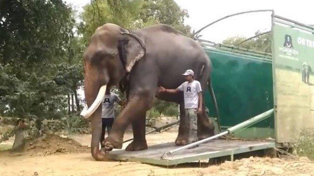 ONG liberta elefante escravizado há 51 anos e leva a santuário na Índia; vídeo https://t.co/oPHs6aLr7H