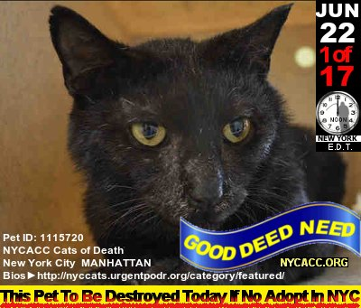 A #NewYorkCity #Kitty Conundrum  Nice #Cats Die Every Day @ NYCACC JUN 22nd Is No Exception #Adopt #RESCUE #NYC   http:// nyccats.urgentpodr.org/tbd-cats-page/  &nbsp;  <br>http://pic.twitter.com/7TVdq8PHJw