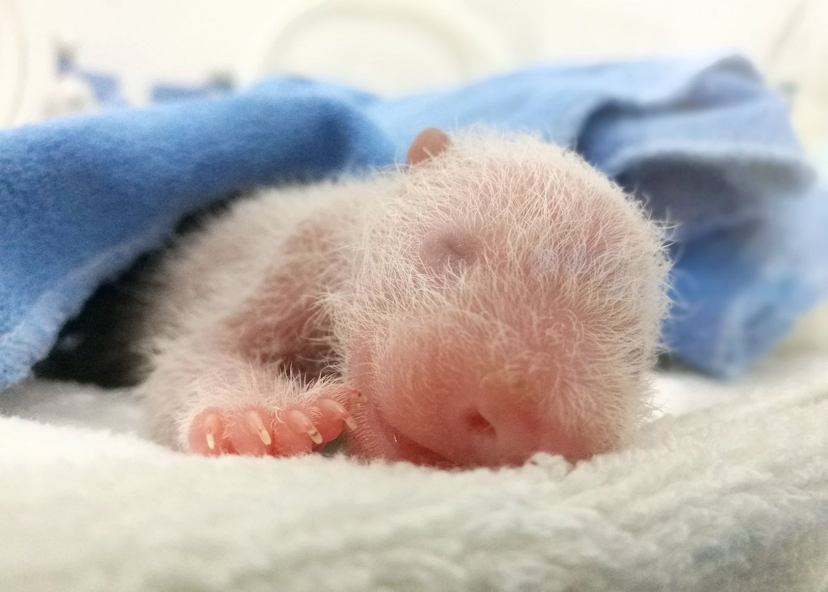 Картинки новорожденные медведи