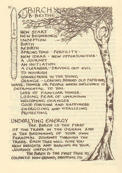 #folklorethursday More from The Ogham tree, Birch. And I love Glennie Kindred books #trees #plants #herbs<br>http://pic.twitter.com/Lu4PnapPNU