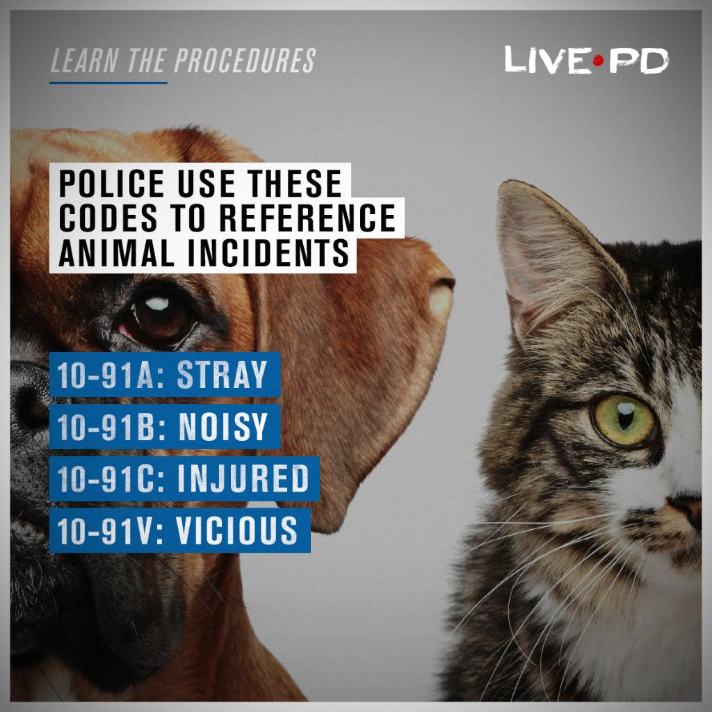 Next time we see a stray cat, we'll know the proper lingo. 🐈 #LivePD h...