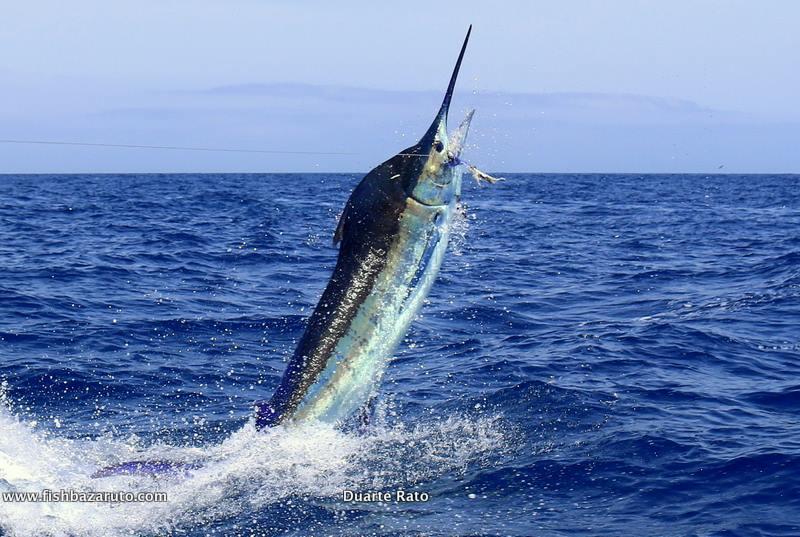 Cape Verdes - Smoker went 1-2 on Blue Marlin.