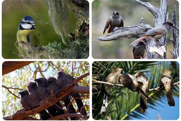 Study of 3,000 #bird species reveals the 2-step #evolution of cooperative breeding... and what drove it #PLOSBiology  http:// plos.io/2sYfb3t  &nbsp;  <br>http://pic.twitter.com/yA6gtB0blq