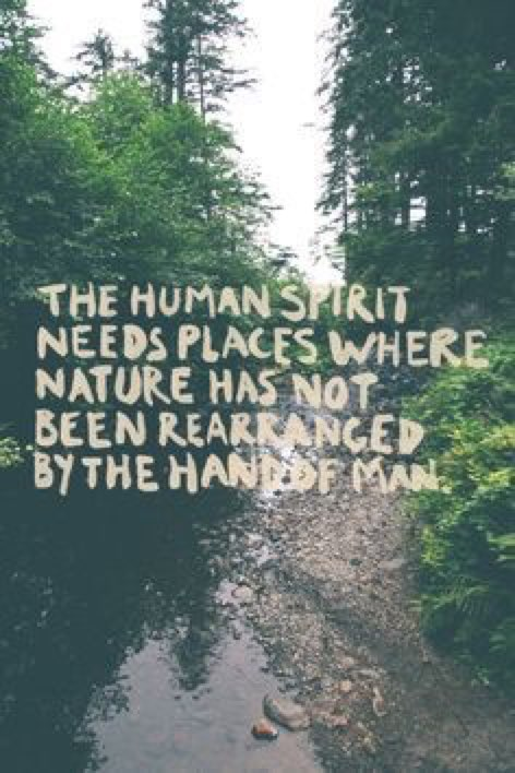 If you want to journey within, Go out in Nature.  #ThursdayThought #In...