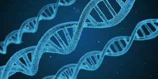 Scientists capture #DNA replication on video for the first time: and reveal a surprise finding  http:// ow.ly/bz8u30cN8BN  &nbsp;  <br>http://pic.twitter.com/e9LzpT8veb