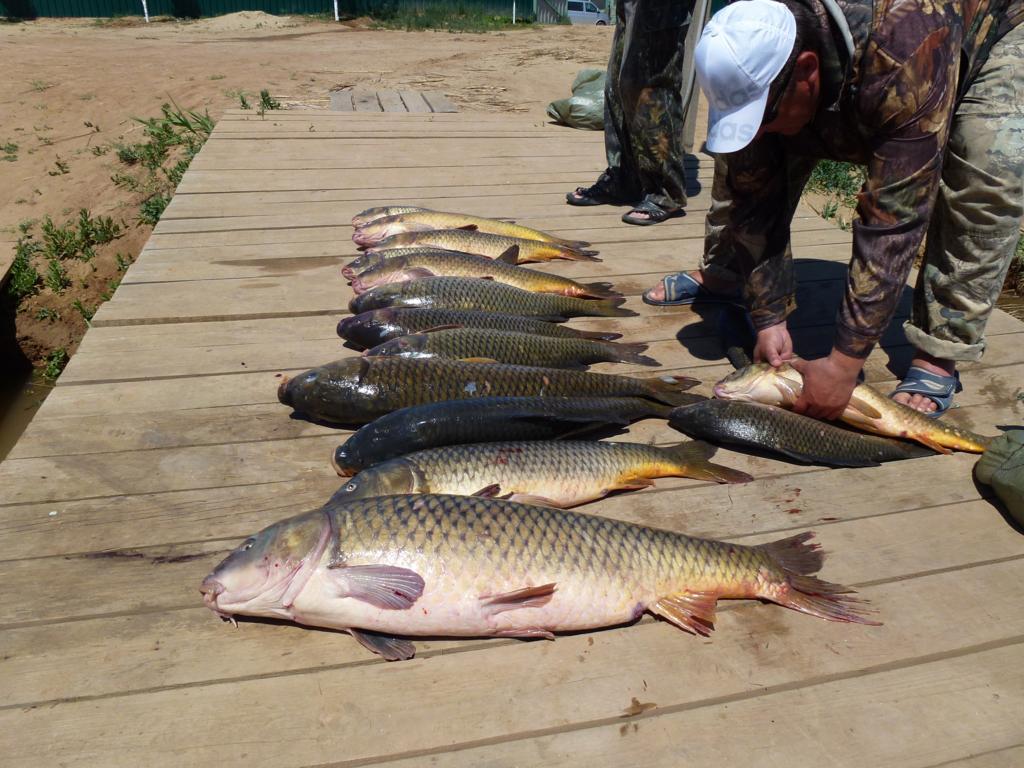 Тур рыбалка в дельте волги