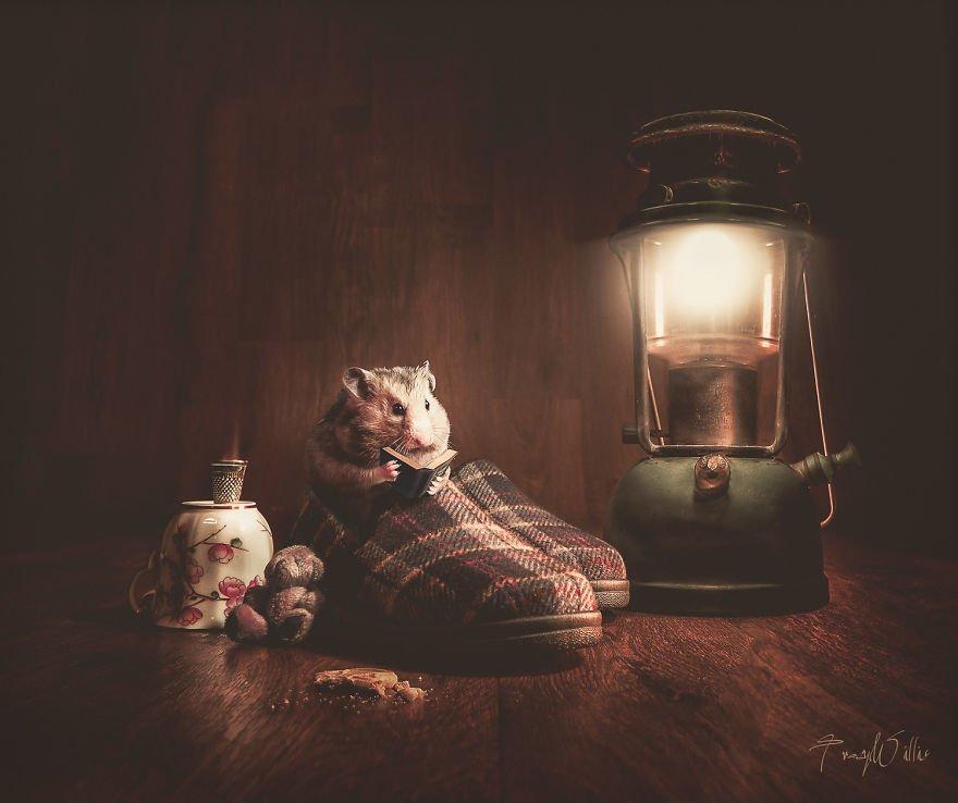 A quelques heures de #VendrediLecture vous souhaiter une excellente #nuit à venir sur cette illustration de Tracy Willis !pic.twitter.com/gA12XJqvfm