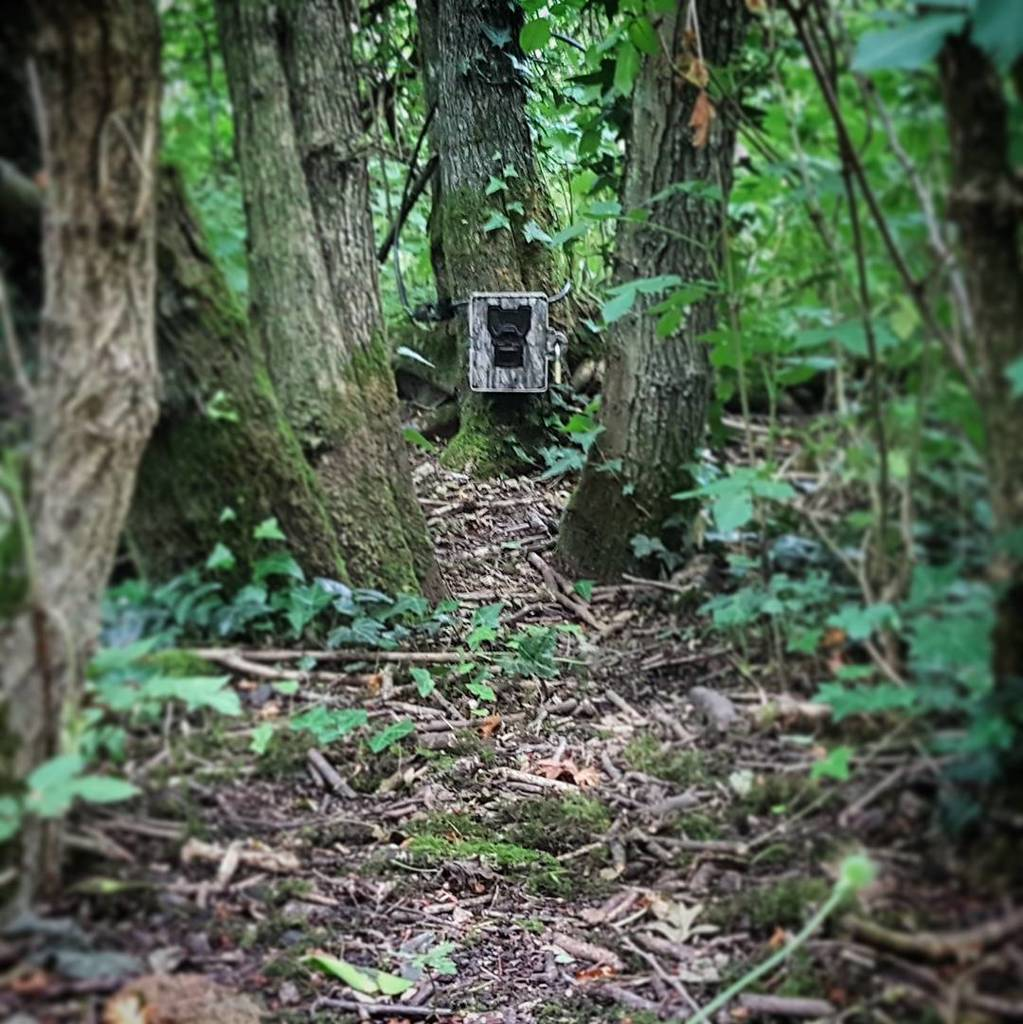 Badger bum-cam is in place. #Badgers  #mustelids #mammals #wildlife #ecology #conservation #WeScience  http:// ift.tt/2sG60St  &nbsp;  <br>http://pic.twitter.com/n3QYYbNqs5
