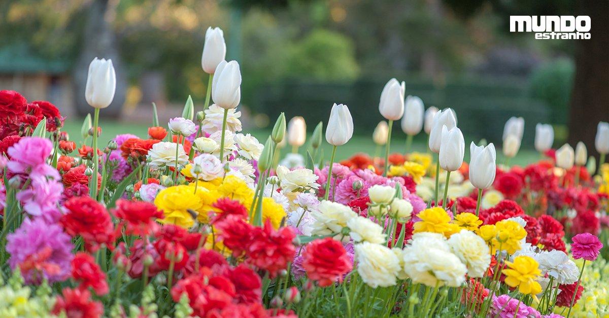Por que as flores tem perfume? https://t.co/CYobKsIVr8