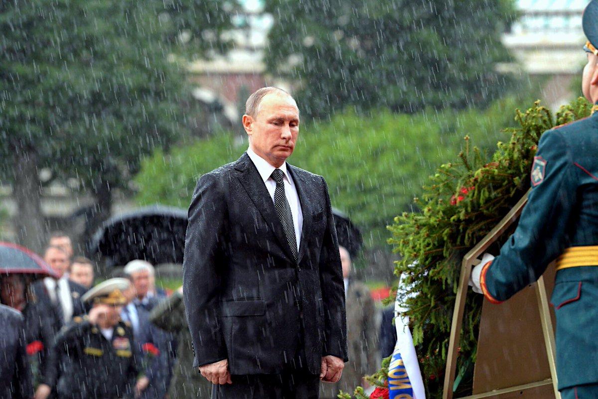 фото дня снимок промокшего медведева средние