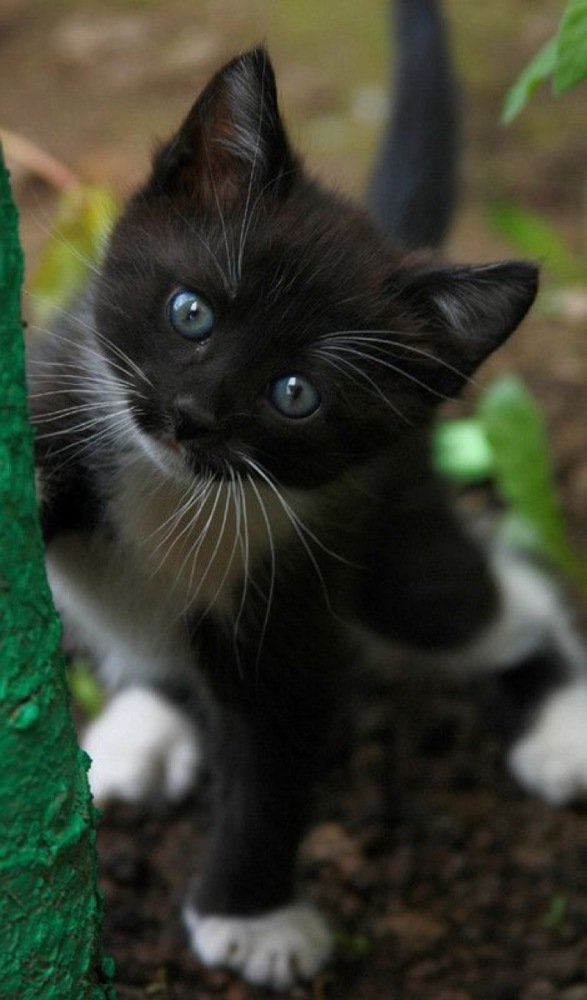 What a cutie...... [See ALL our best cat Pix here -