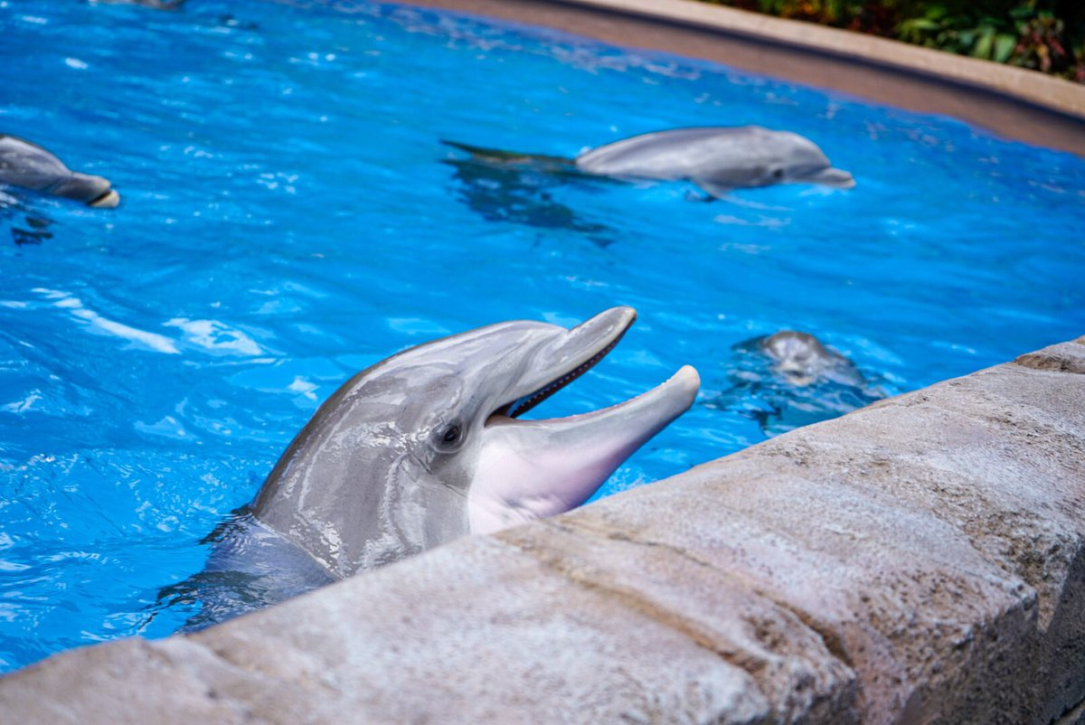 Orlando Informer On Twitter Seaworld S Dolphin Nursery Opened Today It Looks Great